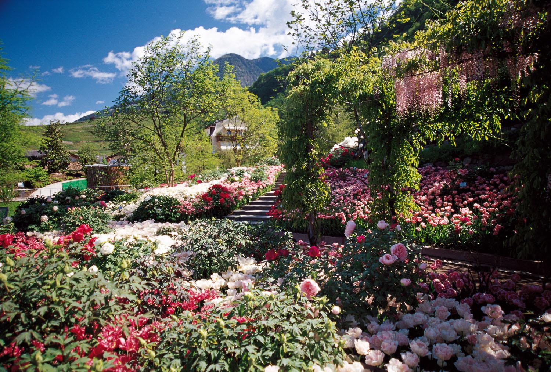 08.Tulipani, peonie e glicinie in fiore
